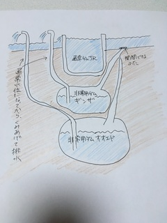 IMG_4993.JPG